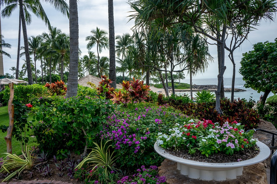 Beautiful Maui gardens